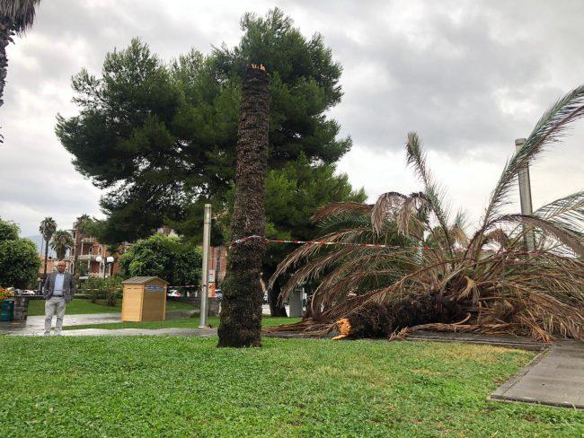 Una palma abbattuta sul lungomare, accanto al monumento-aereo