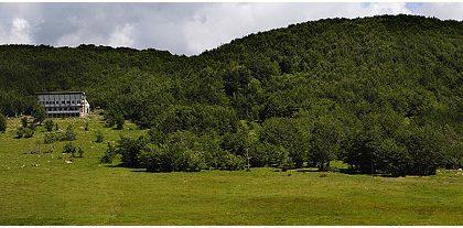 Forest Bathing al Pratomollo