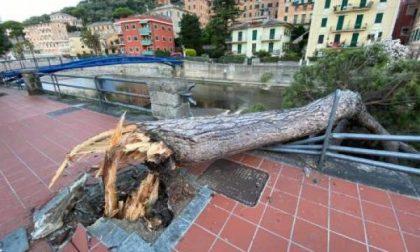 """""""Errori nell'esecuzione di lavori e così quell'albero è crollato"""""""