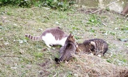 Colonie feline, salgono a 47 le sterilizzazioni