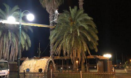 A Chiavari un piano di prevenzione e cura delle palme infestate dal punteruolo rosso