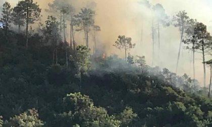Incendio boschivo fra Sestri e Casarza