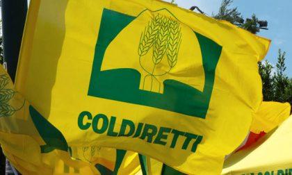 """Coldiretti: """"Evitare lockdown a Natale"""""""