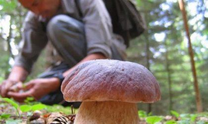 Cercatore di funghi si perde a Prato Mollo, ritrovato