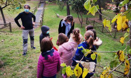 A Sestri i bambini raccolgono le olive: le foto