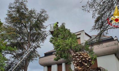 Albero si abbatte su una casa a Rapallo – FOTO GALLERY