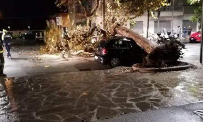Platano si abbatte su un'auto in corso Buenos Aires