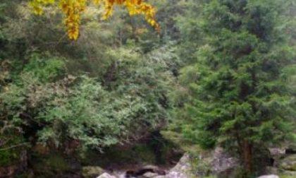 L'incanto del bosco in autunno in valle