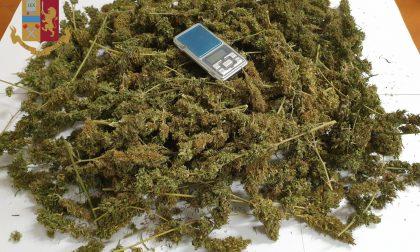 Coltiva marijuana nel suo bed and breakfast, denunciato