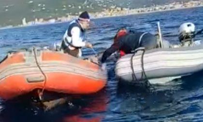 Liberato a Chiavari un delfino rimasto intrappolato in una rete