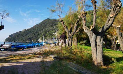 Potatura sul lungomare della frazione di Riva Trigoso