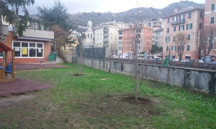 Piantati nuovi alberi nel giardino della scuola d'infanzia di via Milano