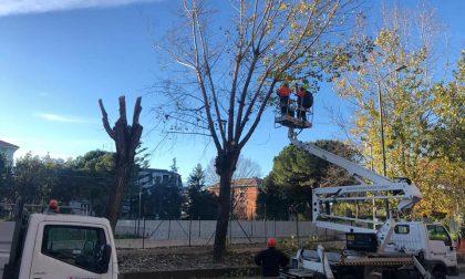 Ripartono i lavori in piazza Del Buono