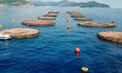 """Italia Nostra : """"No all'ampliamento dell'impianto di maricoltura"""""""