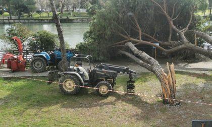 Quattro pini caduti nella notte a Chiavari