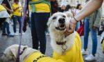 Arcaplanet dona 285 tonnellate di cibo a cani e gatti in difficoltà