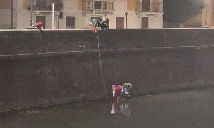 Capriolo nel fiume Boate, l'intervento dei Vigili del Fuoco