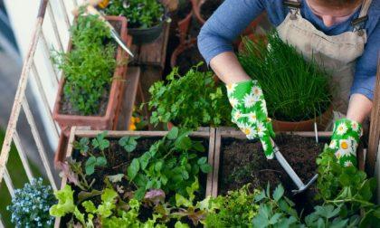 Facciamo l'orto in casa con Il Nuovo Levante