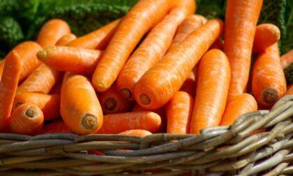 In regalo con Il Nuovo Levante i semi di carota