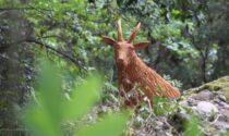 Alla ricerca degli animali intagliati, nuovo percorso nel Parco di Portofino