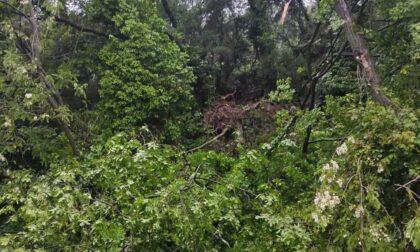 Strada chiusa da Loto a Cascine per caduta albero