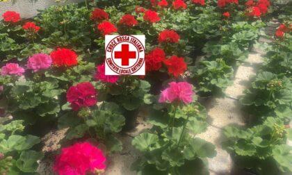 Regala un geranio per aiutare la Croce Rossa