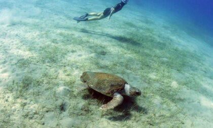 Alla ricerca delle tartarughe marine: il film premiato all'Inmare Film Festival di Camogli