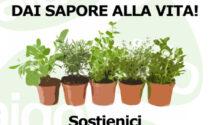 Piantine aromatiche a sostegno di AIDO