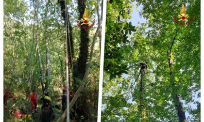 Salvato dai vigili del fuoco dopo l'atterraggio con il parapendio... su un albero di San Colombano - Foto e Video
