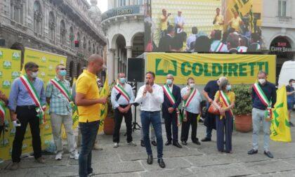 Covid: 70 mila cinghiali assediano la Liguria