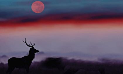 """Il Sestante invita ad osservare la """"Luna del Cervo"""" al parco Mandela"""