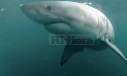 Avvistato uno squalo nelle acque di capo Ampelio, ma il video è un fake