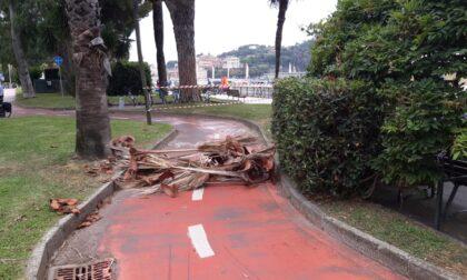 Cadono due palme in piazza Sant'Antonio e sul lungomare, l'opposizione chiede interventi immediati