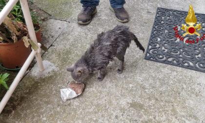Si incastra in un tubo di scolo dell'acqua, gatta salvata dai vigili del fuoco