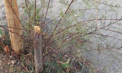Atto vandalico al Parco della Memoria sul Lungomare di Chiavari