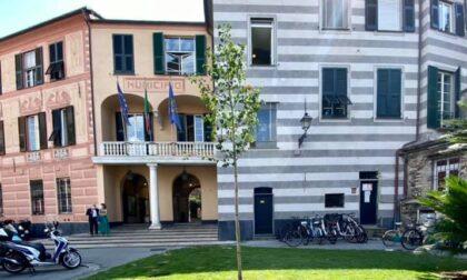 """Rapallo sempre più """"green"""", nuovi alberi davanti al Comune e a Villa Porticciolo"""