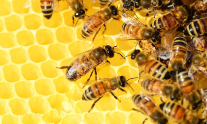 Addio a un vaso di miele su quattro per il clima pazzo. I 26 comuni del Levante danneggiati