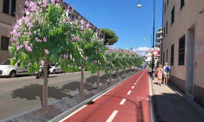 Chiavari: approvato il progetto per la piantumazione di 43 alberi in Corso Colombo