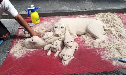 Fra i cuccioli del cane di sabbia spunta...un gatto!