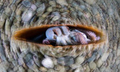 La foto subacquea più bella del mondo è ligure