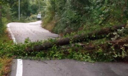 Albero crollato sulla strada intervento dei Vigili del Fuoco